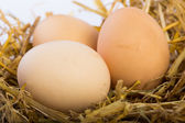 Eggs on a straw — Stock Photo
