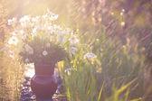 Abstracte achtergrond met anemonen — Stockfoto