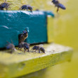 Bees near the hive — Stock Photo #49635085