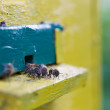 Bees near the hive — Stock Photo #49635251