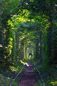 Tunel lásky — Stock fotografie