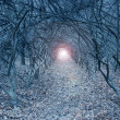 Surreal arch-like trees in a muted dreamlike woods — Stockfoto