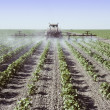 Spraying young cotton plants in a field — Stock Photo #29737003