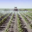 Stock Photo: Spraying young cotton plants in field