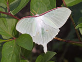 Large white butterfly — 图库照片