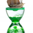 Snail and gel hourglass — Stock Photo