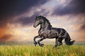 Black Friesian horse gallop — Stock Photo