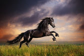 Black Friesian horse gallop — Photo
