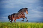 Beautiful brown horse running gallop — Stock Photo