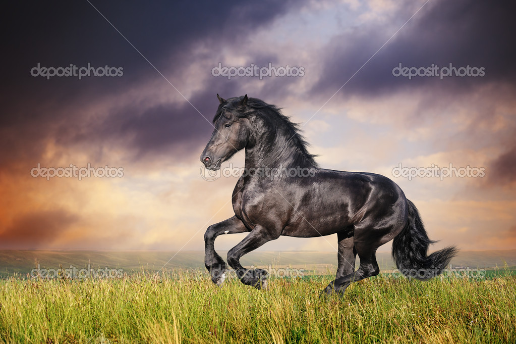 Horse Galloping In Field