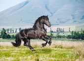 Beautiful black horse running gallop — Stock Photo