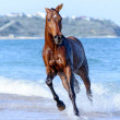 Horse in the water - Stockfoto