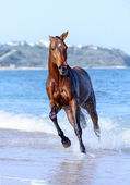Horse in the water — Stock Photo