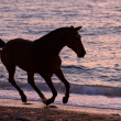 Stock Photo: Horse running through water