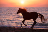 Horse running through water — Stock Photo