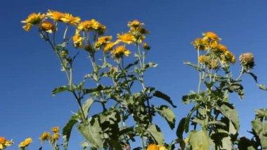 Waving wild flowers in wind — Stock Video