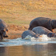 Hippopotamus in water — Stock Photo #18913959