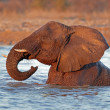 Elephant in water — Stock Photo #18913963