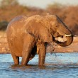 Elephant in water — Stock Photo