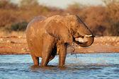 Elefante en el agua — Foto de Stock