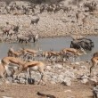 Etosha waterhole — Stock Video #23678513