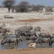 Etosha waterhole — Stock Video #25522203