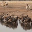 Video Stock: Etosha waterhole
