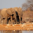 Stock Photo: Elephants at waterhole