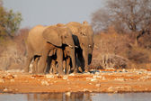 Elephants at waterhole — Stock Photo