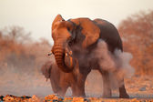 African elephant covered in dust — Stock Photo