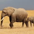 African elephant with calf — Stock Photo #34651009