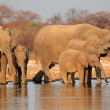 Stock Photo: Elephants drinking water