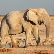 Stock Photo: Africbull elephant