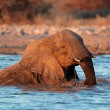 Stock Photo: Elephant in water
