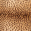 Cheetah skin — Stock Photo #39037719