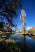 Étang et arbres — Photo