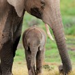 African elephant with calf — Stock Photo #46150473