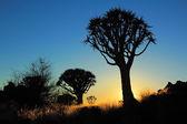 Kołczan drzewo sylwetka — Zdjęcie stockowe