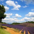 Foto Stock: Lavender field in Provence, France