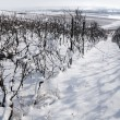 Snow farm vineyard. Germany — Stock Photo
