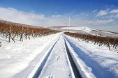 виноградник в зимний период. германия — Стоковое фото