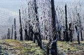 Wijngaard in de winter. duitsland — Stockfoto