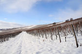 Viñedo de granja de nieve. alemania — Foto de Stock