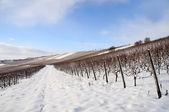 Vigneto di fattoria di neve. germania — Foto Stock