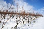 снег фермы виноградник. германия — Стоковое фото