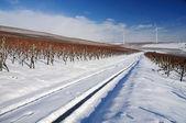 Winter vineyard, Germany — Stock Photo