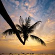 Sunset with palm and boats on tropical beach — Stock Photo #23504501