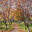 Beautiful alley in autumn park — Stock Photo