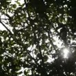 Forest with sun behind green leaves — Stock Video #12783783