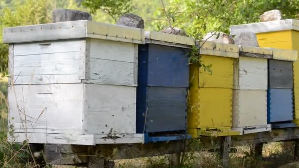 Travailleur d'abeille miel maison nature représentant santé médecine et concept de production d'aliments biologiques — Vidéo